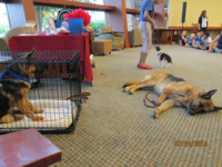 Verona library hosts dancing dogs